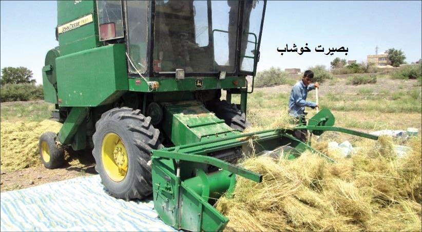 گزارشی درباره دشواری های تولید گیاهان دارویی در مناطق کویری داورزن - دلالان برنده چرخه اقتصادی گیاهان دارویی - علی اکبر ملکی