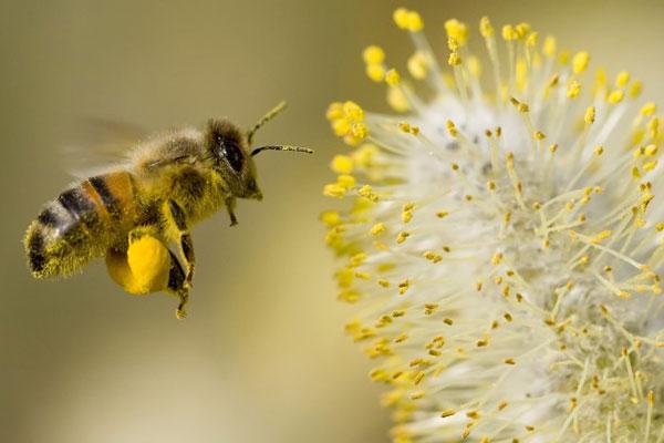 زنبورداران سبزوار چشم انتظار حمایت مسئولان-بصیرت خوشاب